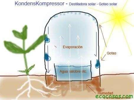 Riego por goteo gratis, con agua de mar y sin gastar energía 3