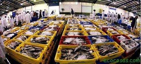La impunidad seguirá reinando (sobreexplotación pesquera) 23