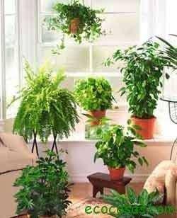 Plantas para purificar el aire en casa ecocosas for Plantas de interior limpian aire