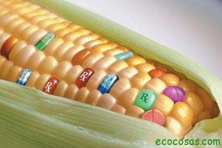 trans Francia pide a la CE que prohíba cultivar el maíz transgénico de Monsanto