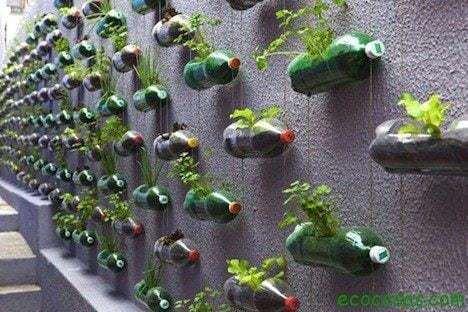 Plantar en botellas de plástico 36