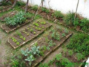 huerta 1 Como hacer una huerta orgánica en casa y no morir en el intento