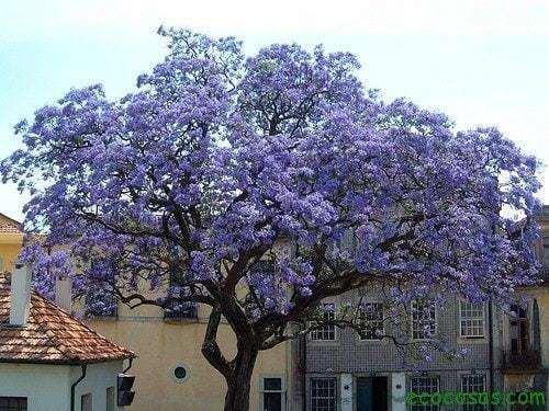 El árbol que puede salvar al mundo 5