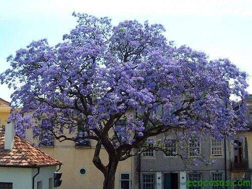 El rbol que puede salvar al mundo ecocosas for Arboles que dan sombra para jardin
