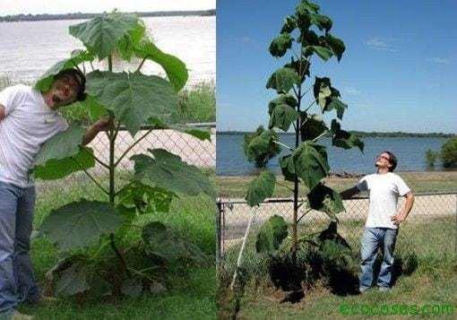 El árbol que puede salvar al mundo 2