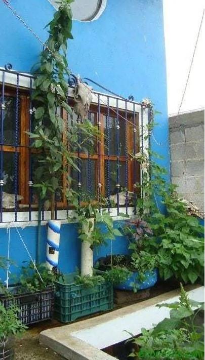 Organoponía, una excelente solución para el huerto en el balcón 9