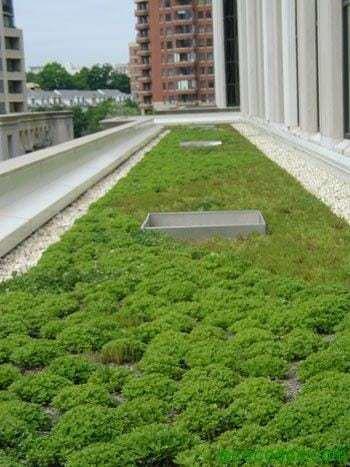 techoverde Techos Verdes, excelente opción para ayudar al Medio Ambiente y gastar muy poco en climatización