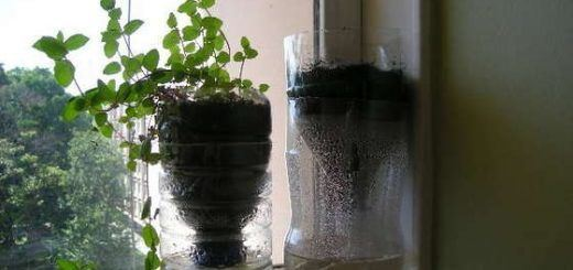 Self-watering-recycled-vase
