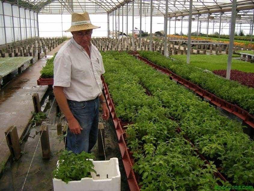 imgp04341 Plantas que curan, Plantas prohibidas (Documental)