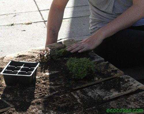 Jardín vertical reciclando un palet 8