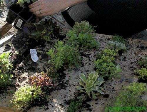 Jardín vertical reciclando un palet 9