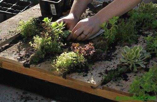Jardín vertical reciclando un palet 10
