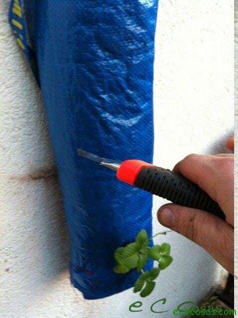 Como cultivar fresas en una bolsa de rafia 10