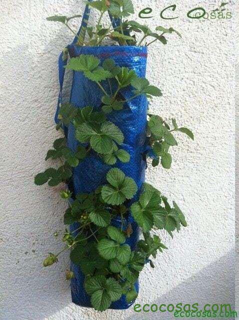 cultivo de frutillas en bolsas