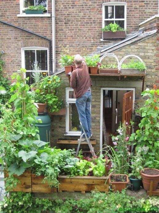 Transforma tu casa en un huerto 1