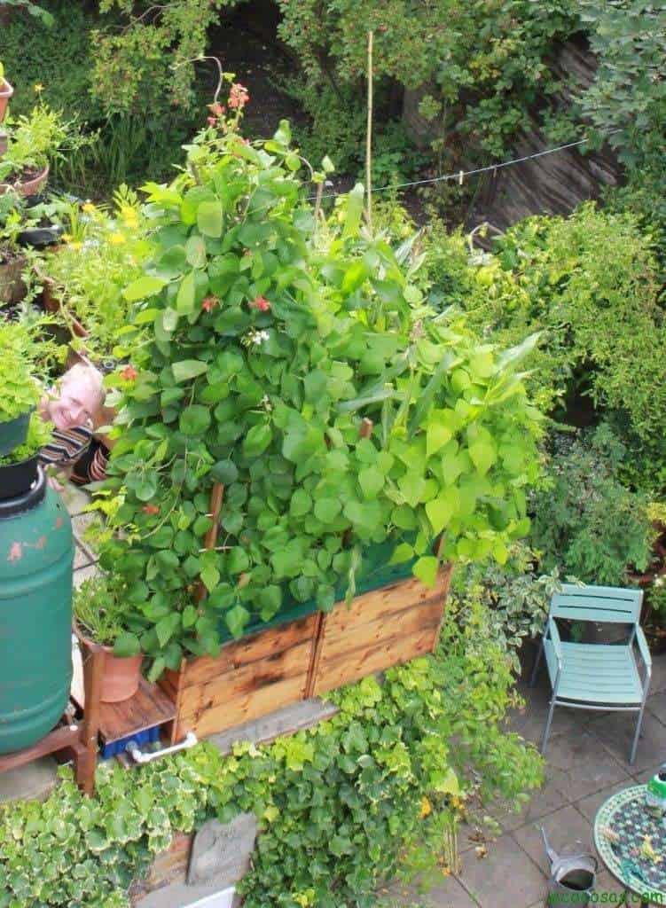 Transforma tu casa en un huerto 3