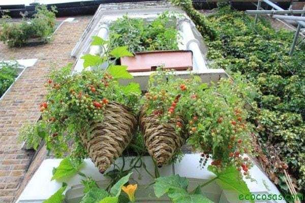 Transforma tu casa en un huerto 4
