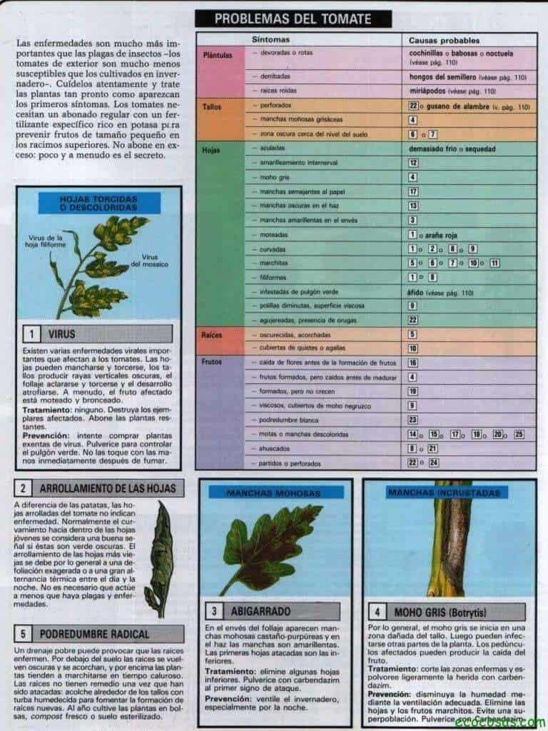 Tomates, plagas, enfermedades, semilleros y más 5