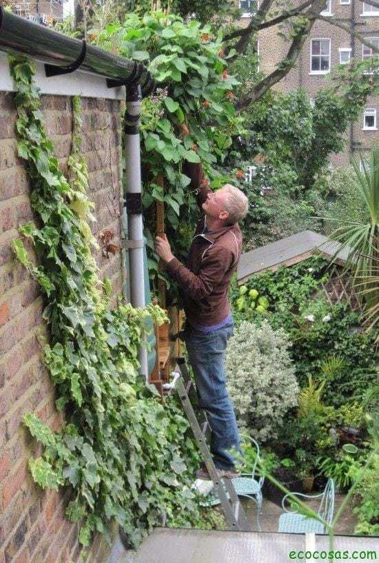 Transforma tu casa en un huerto 5