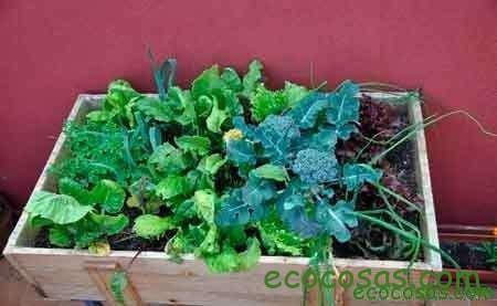 como sembrar en macetas