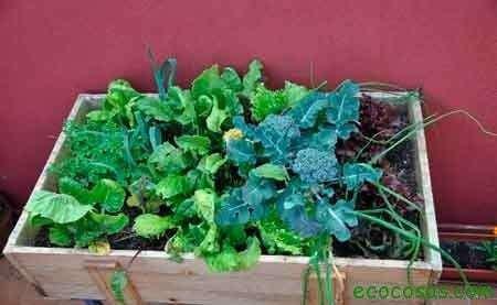 Como cultivar con macetas (macetohuerto) y no morir en el intento (Primera parte) 3