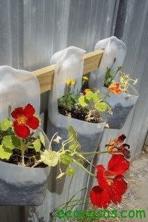 Macetas con botellas plásticas 6