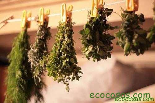 10 + 1 formas de preservar tus hierbas aromáticas y plantas medicinales 1
