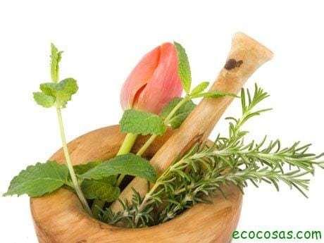 Como recolectar las plantas medicinales 1