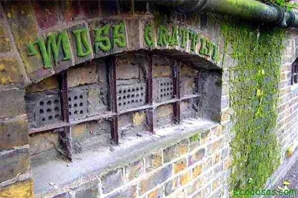 Haz tu propio graffiti de musgo 4