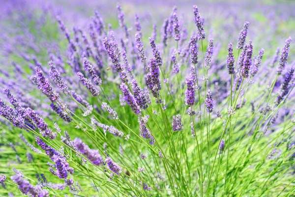 recoleccion de plantas medicinales
