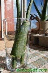 CIMG1035 199x300 Gel de Aloe Vera hecho en casa