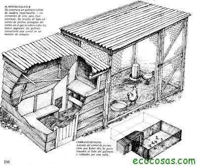 La cría orgánica de gallinas (primera parte) 2