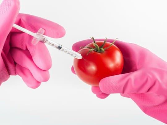 cultivos transgenicos