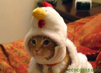 La cría orgánica de gallinas (segunda parte) 4