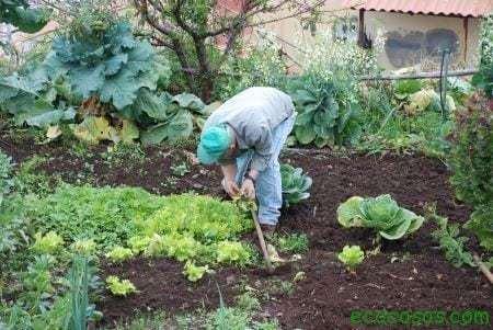 Cultiva un huerto y vive mas años 3