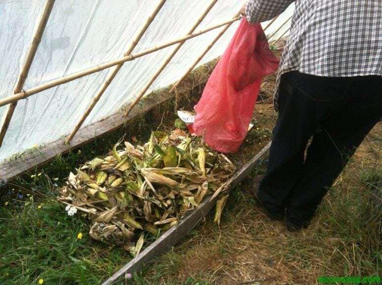 Poniendo los desechos orgánicos