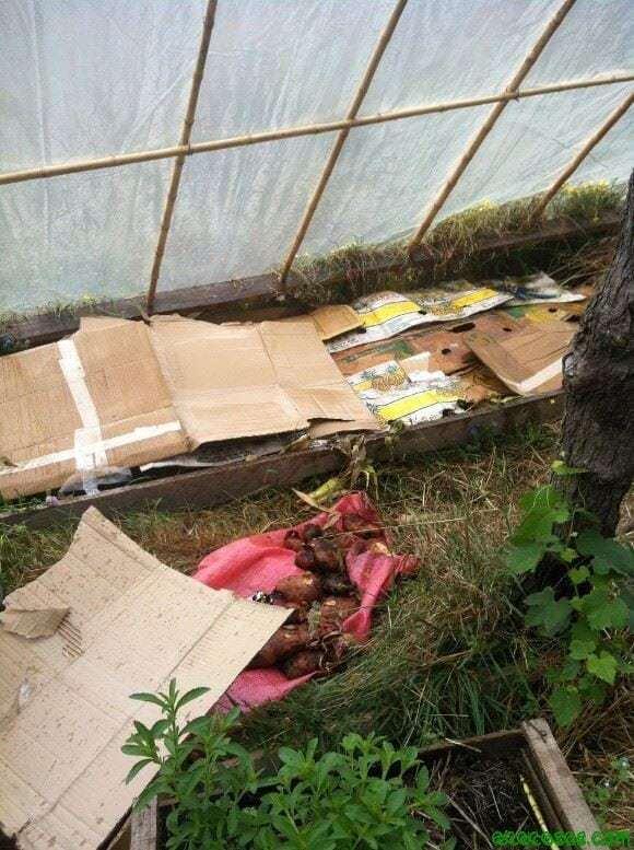 Se cubre con cartón la parte orgánica.