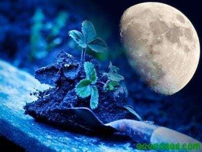 La luna y su efecto en las plantas - Ecocosas