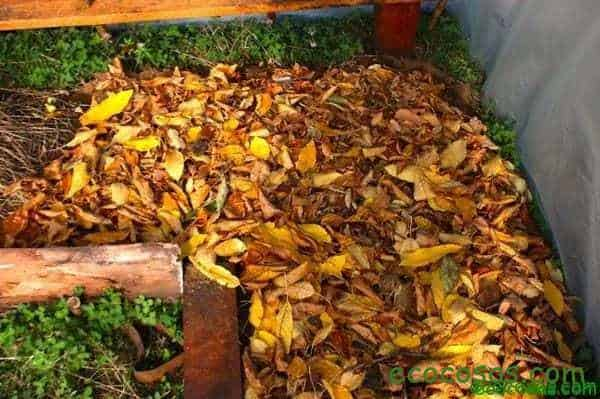 mulch organico