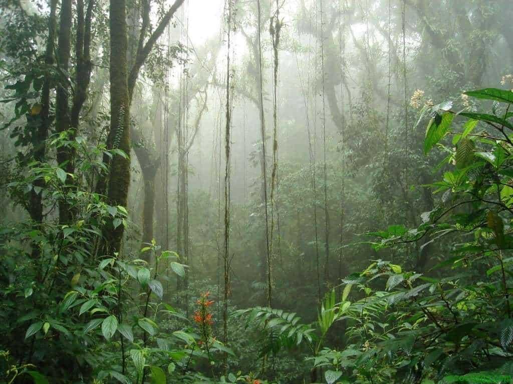 bosque nuboso2 1024x768 Mas árboles para una Tierra agonizante