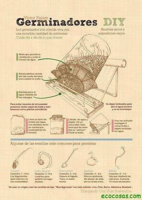 Infografías de métodos de germinación 1
