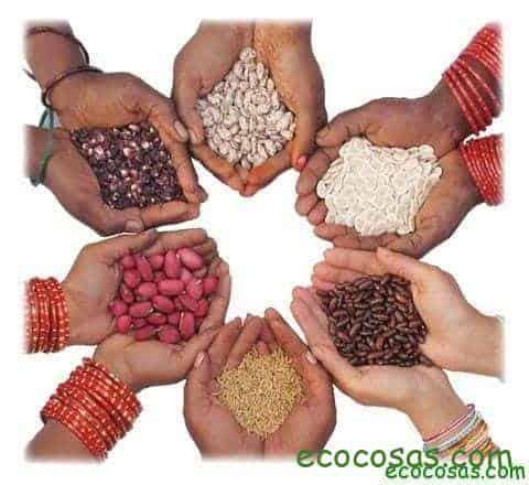 Ecología, Permacultura, Salud Natural, Plantas Medicinales, Como Cultivar, Energías renovables, Bioconstrucción y otros. 7