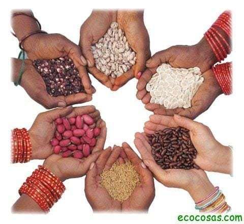 semillas02