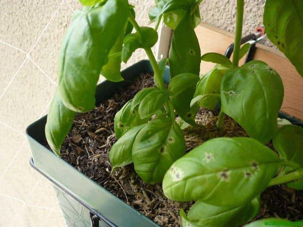 Como cultivar con macetas y no morir en el intento (Tercera parte) 8