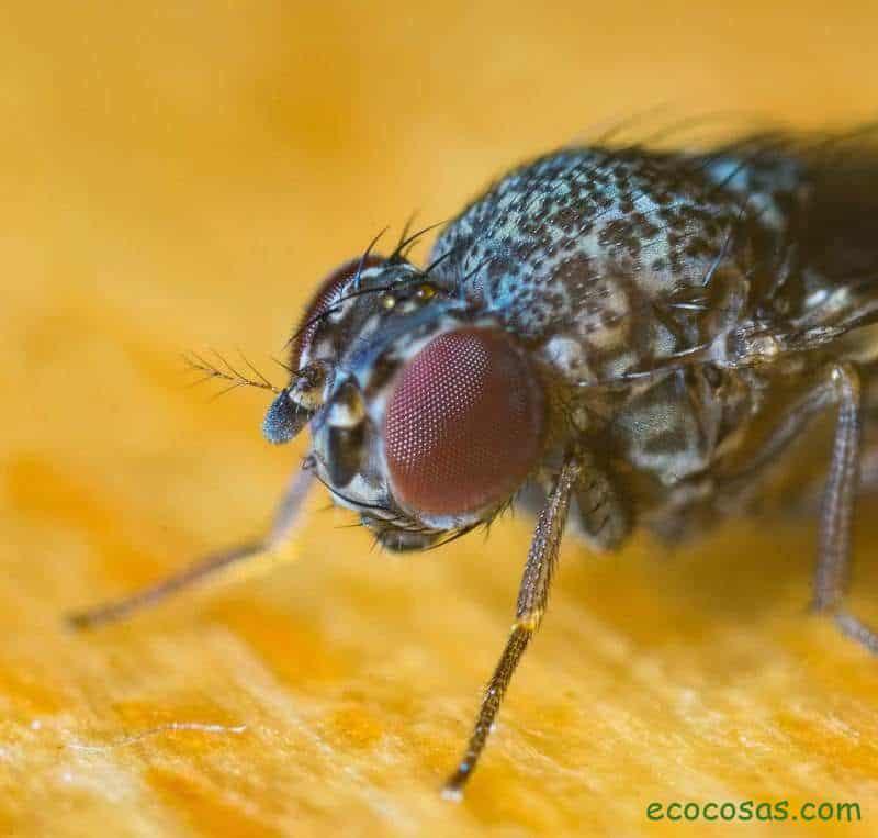 repelente de moscas