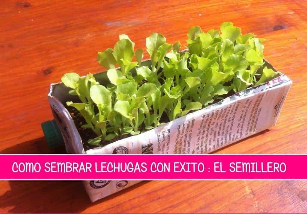 Como sembrar lechuga el semillero ecocosas - Que plantar en el huerto ...