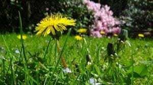 meadow-750