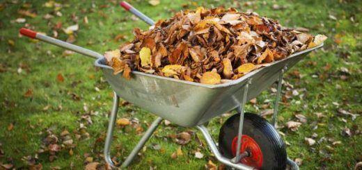 hojas-secas-otono