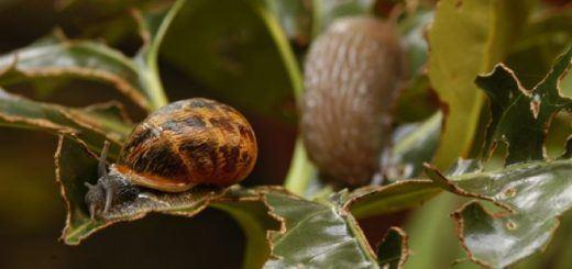 brico-jardin-341-evitar-babosas-y-caracoles-xl-668x400x80xX