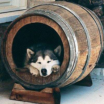 doghouse-wine-barrel-l